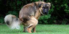 The Doggie Doody