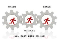 brain, muscles, and bones
