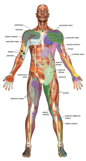 Human Body - Trigger Points