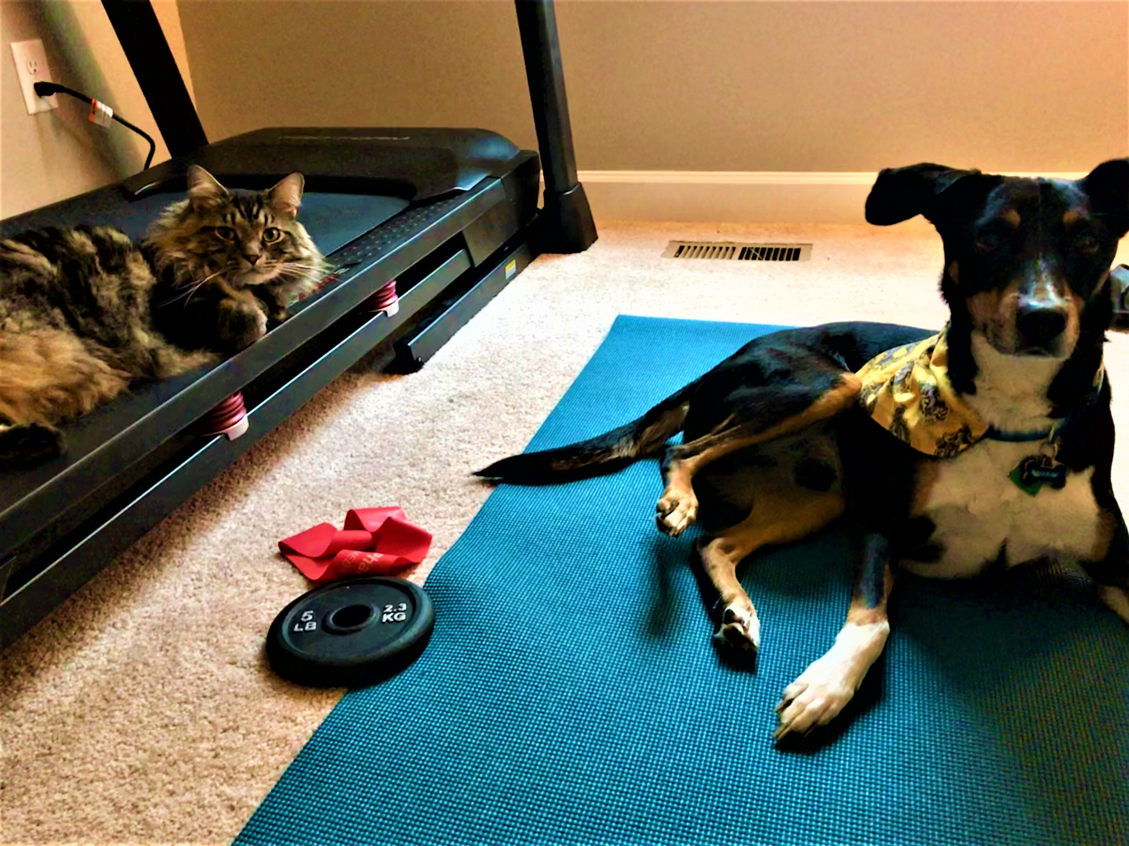 dog on yoga mat and cat on treadmill