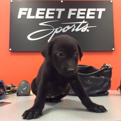 Ff puppy