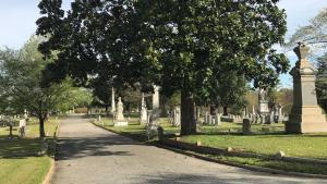 trees, headstones, and walking path in oakwood cemetery