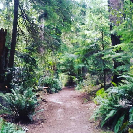 Point Defiance Trails