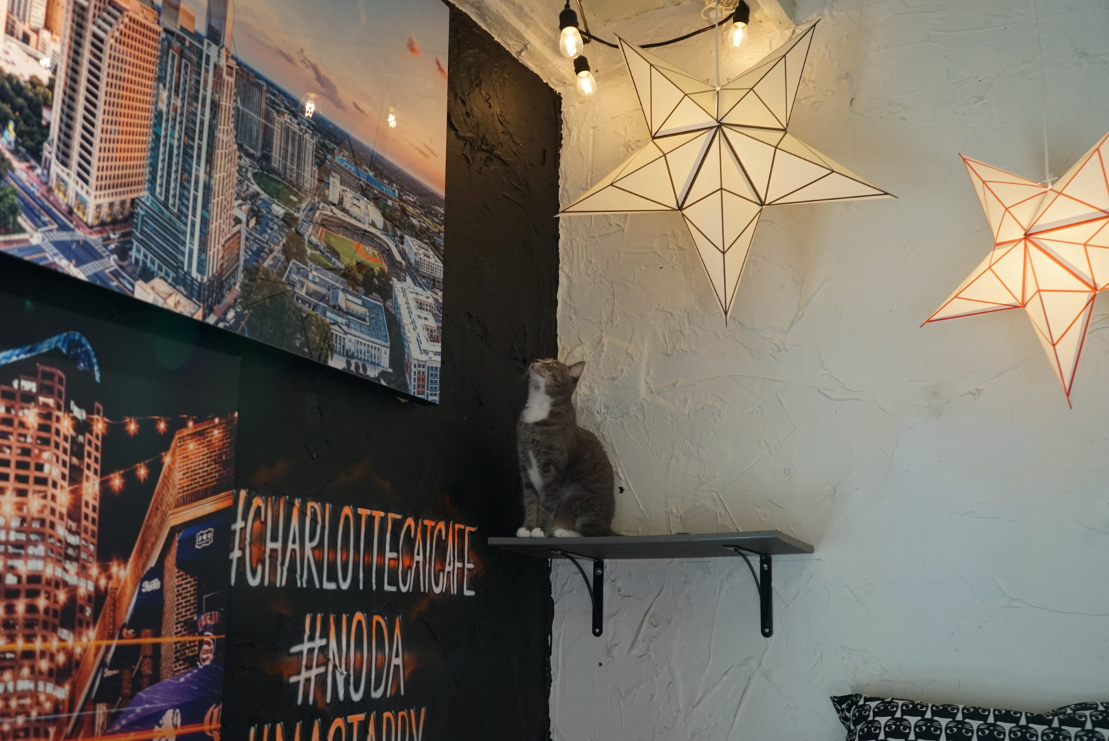 Mac Tabby Cat Cafe Charlotte