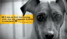 AKC7118 AnimalSheltering copy