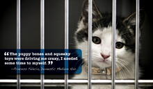 Akc shelter ads 31