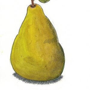 Pear (Watercolor) - Y.U.