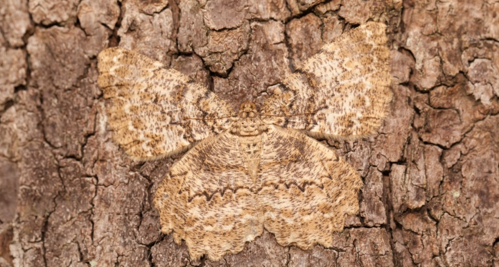 Brown tree trunk with a butterfly camouflaged in the trunk