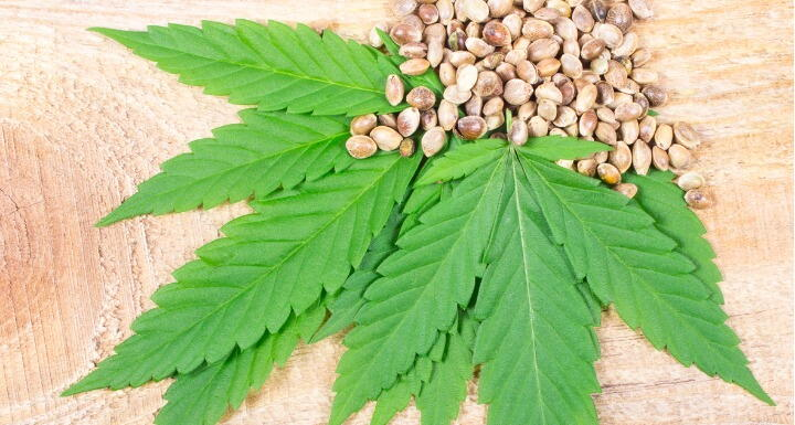 Cannabis Leaf and Seeds on wooden table