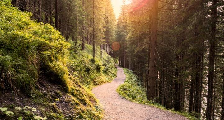 Forest Road Under Sunset Sunbeams
