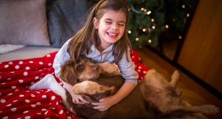 Little girl playing brown dog on Christmas morning