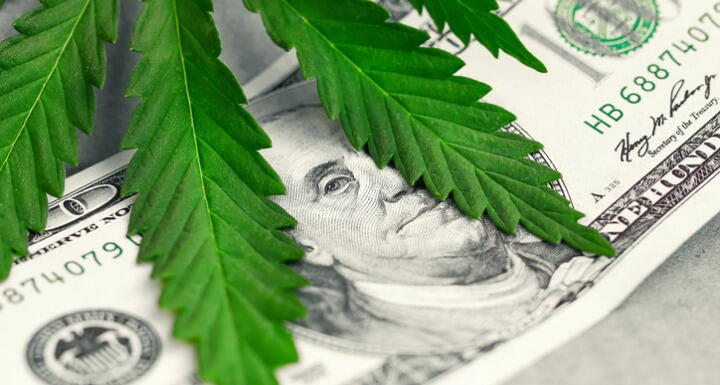 Marijuana plant laying on a paper bill