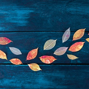 Multicolored Autumn Leaves on Blue Wooden background
