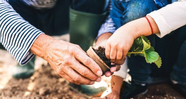 Senior man with granddaughter gardening