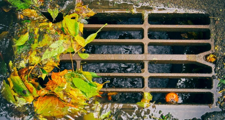 A stormwater grate with fall leaves surrounding it