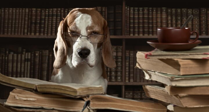 Hound dog with glasses sitting at library table next to stack of books