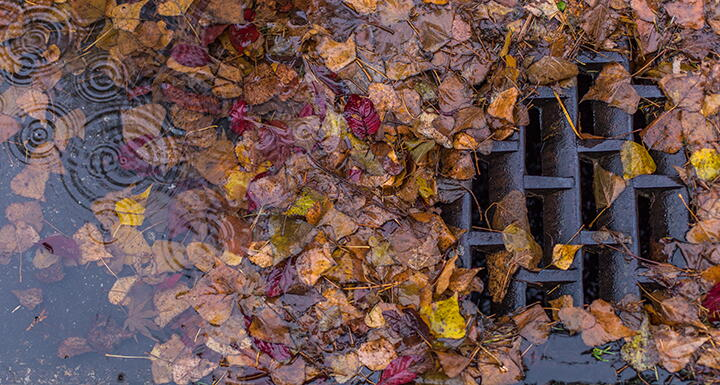 Stormwater drain grate covered in leaves