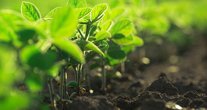 Seedlings growing out of soil