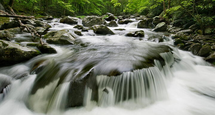 Water rushing over rocks surrounded by foliage