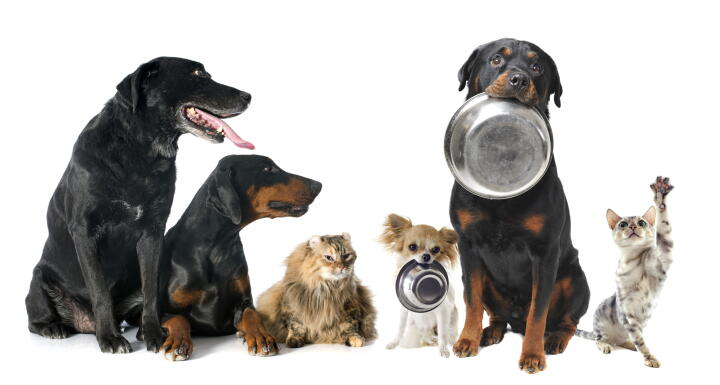 Row of dogs and cats holding silver food dishes in their mouths