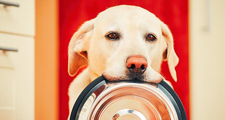 Prescription Dog Food Lawsuit