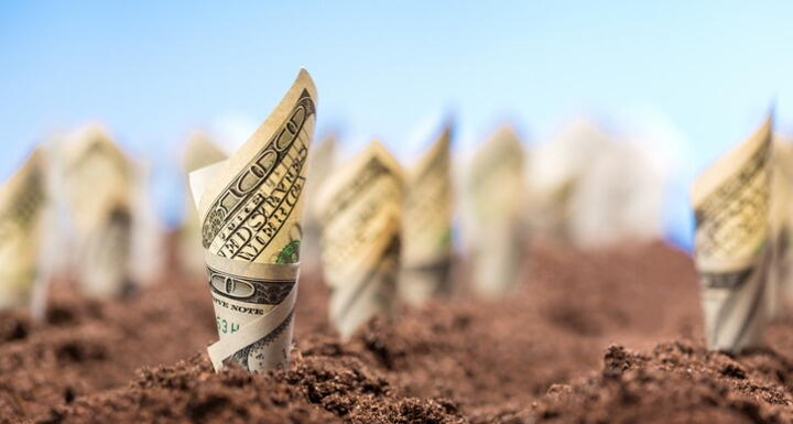 100 dollar bills rolled up and planted in rows in a field