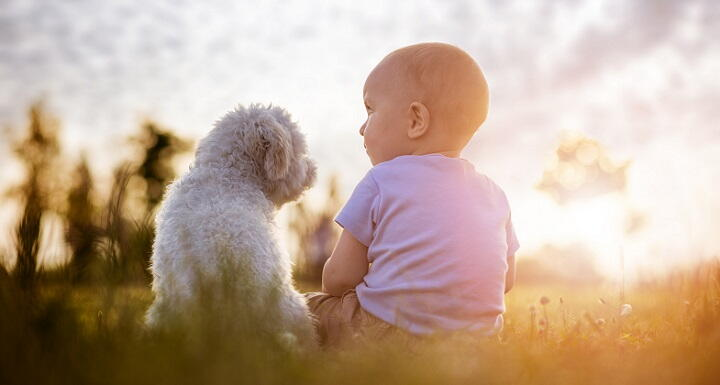 Toddler and dog sitting outside on sunny day
