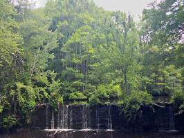 Robertson Millpond Preserve