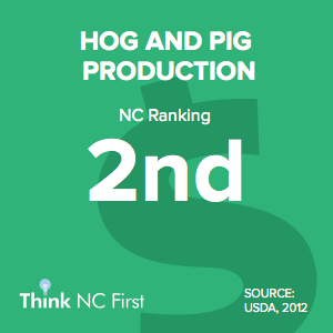 NC Ranks 2nd for Hog and Pig Production