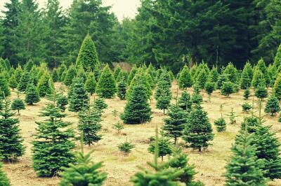 Christmas, Christmas tree, Planet Aid