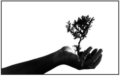 tree planting, India, planet aid