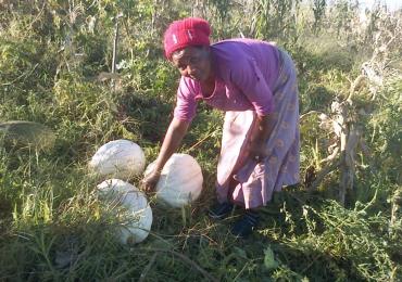 Nongejile, a smallholder farmer