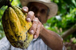 cocoa, farmer, chocolate, valentine's day, planet aid, love