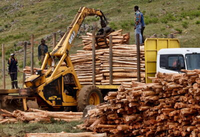 logging, logging industry, trees, forests, pollution, planet aid