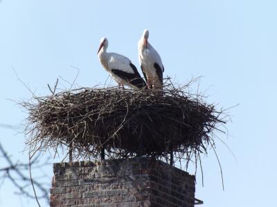 Bird on a chimney