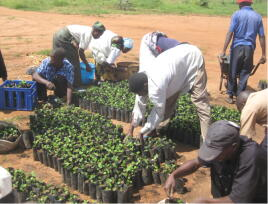 Malawi, Farmers clubs, Planet Aid