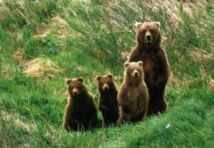 Will the Data Bring the Bears Out of Hibernation? image