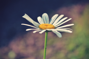 childhood daisy growth depicting blooming seed of possibility, opportunities and growth in the insurance industry