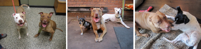 Trio Animal Foundation