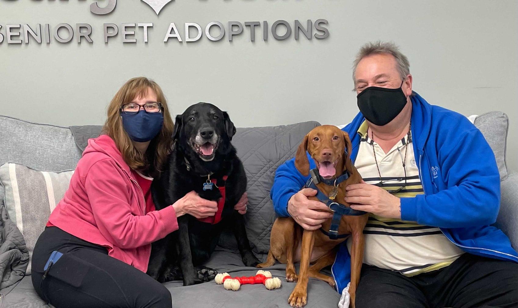 Bella Black Lab Adopted