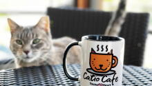 Our New Catio Cafe!
