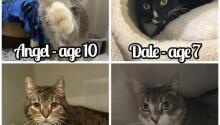 Welcome New Kitties!
