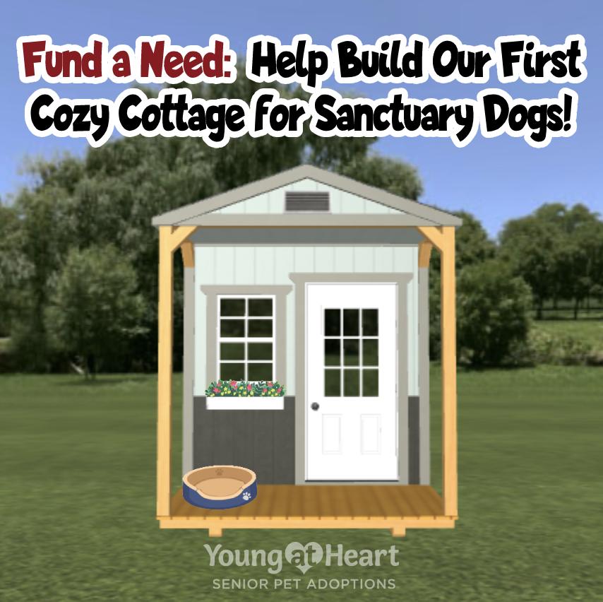Cozy Cottage for Senior Pets
