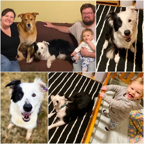 Danny Boy Adopted