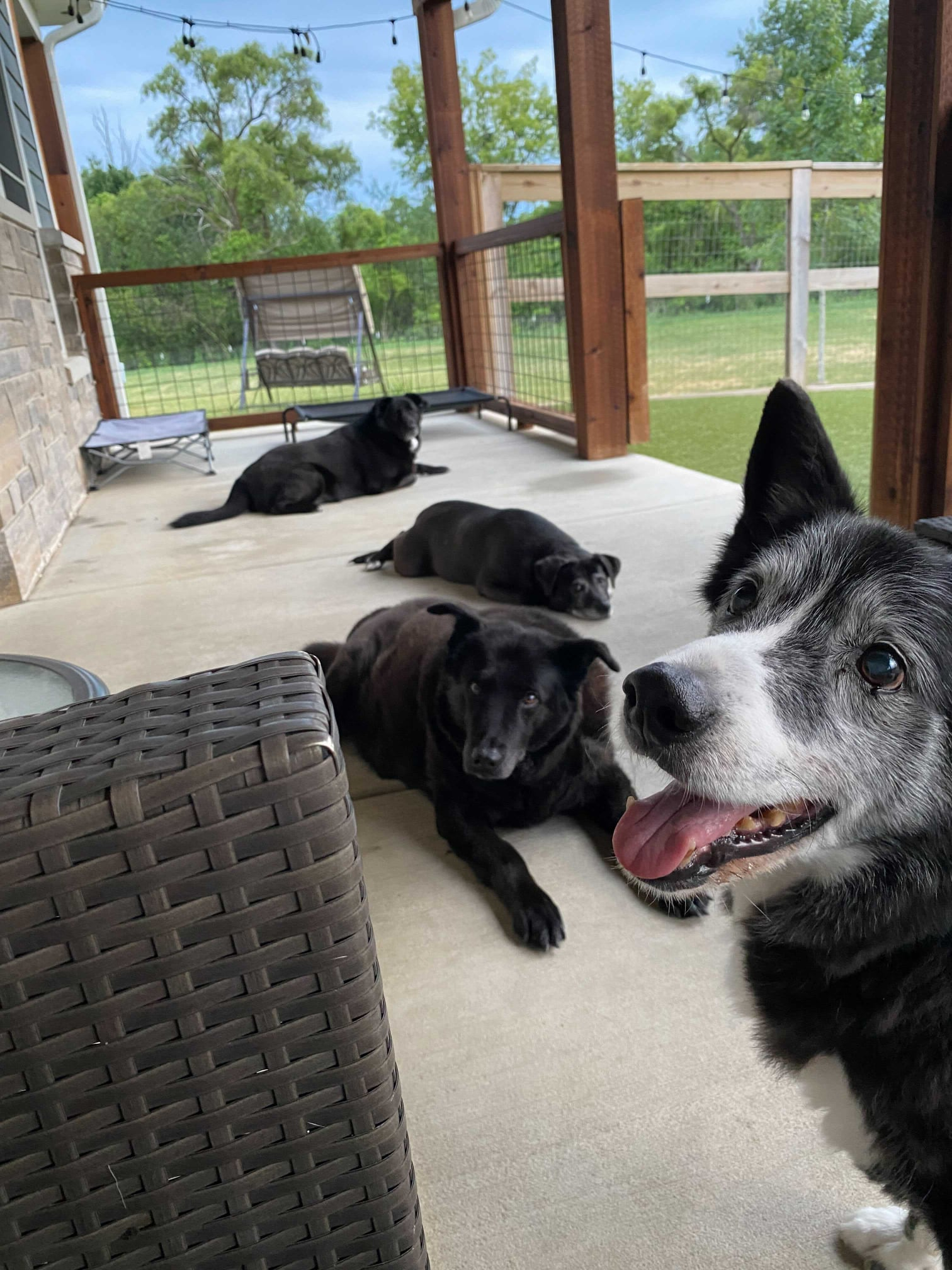 Dogs of Young at Heart Rescue