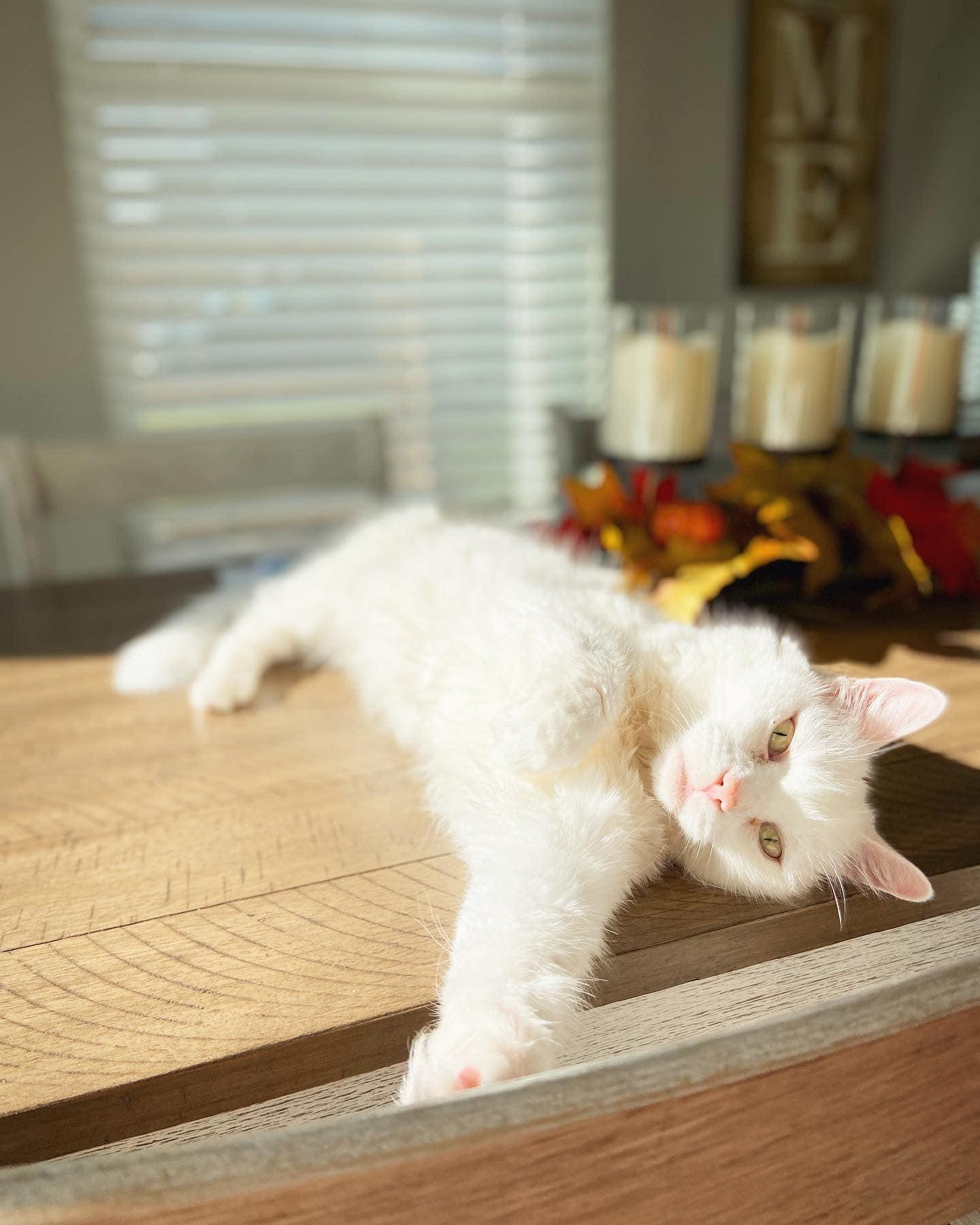 Dolly Sanctuary Cat