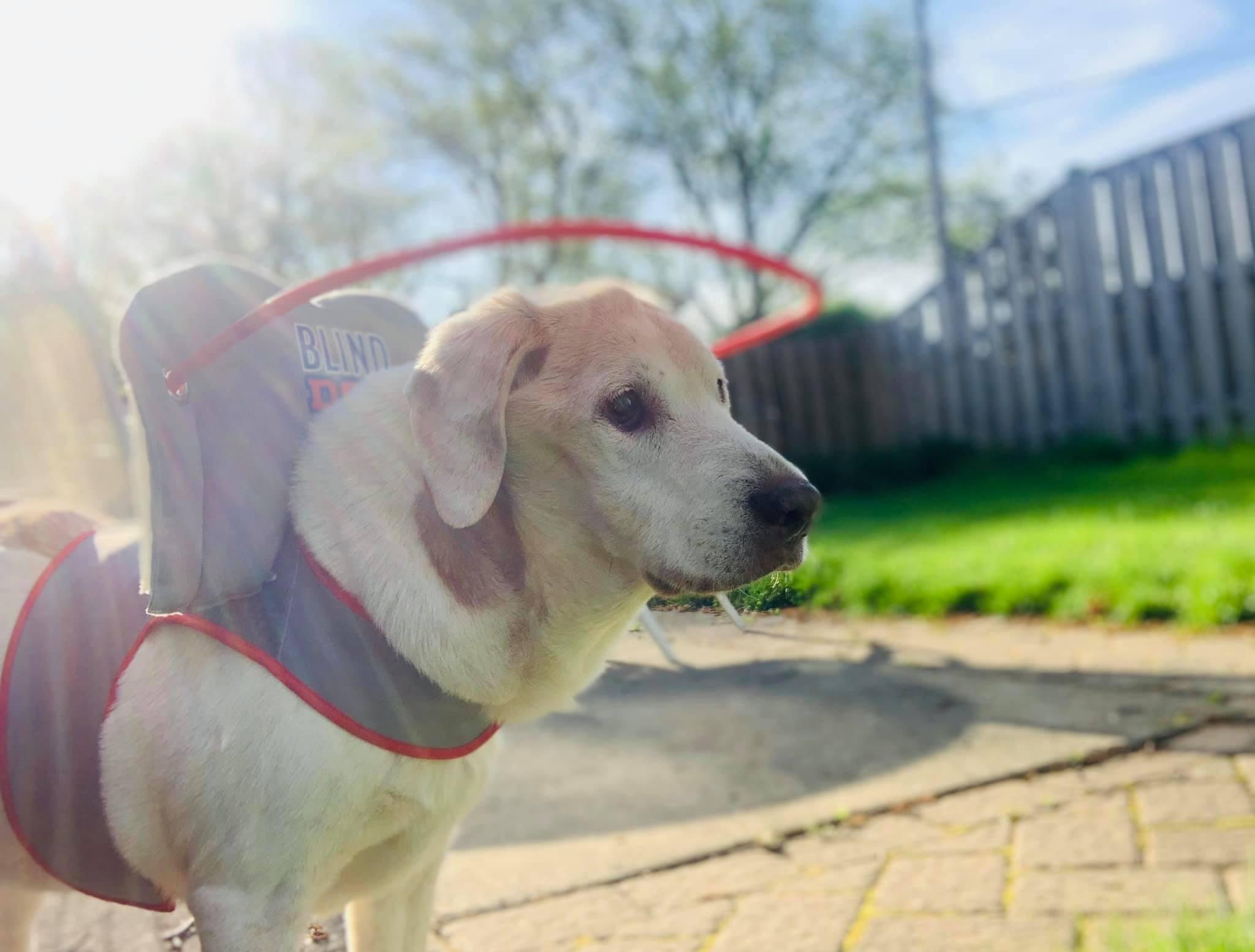 Henrietta Blind Dog