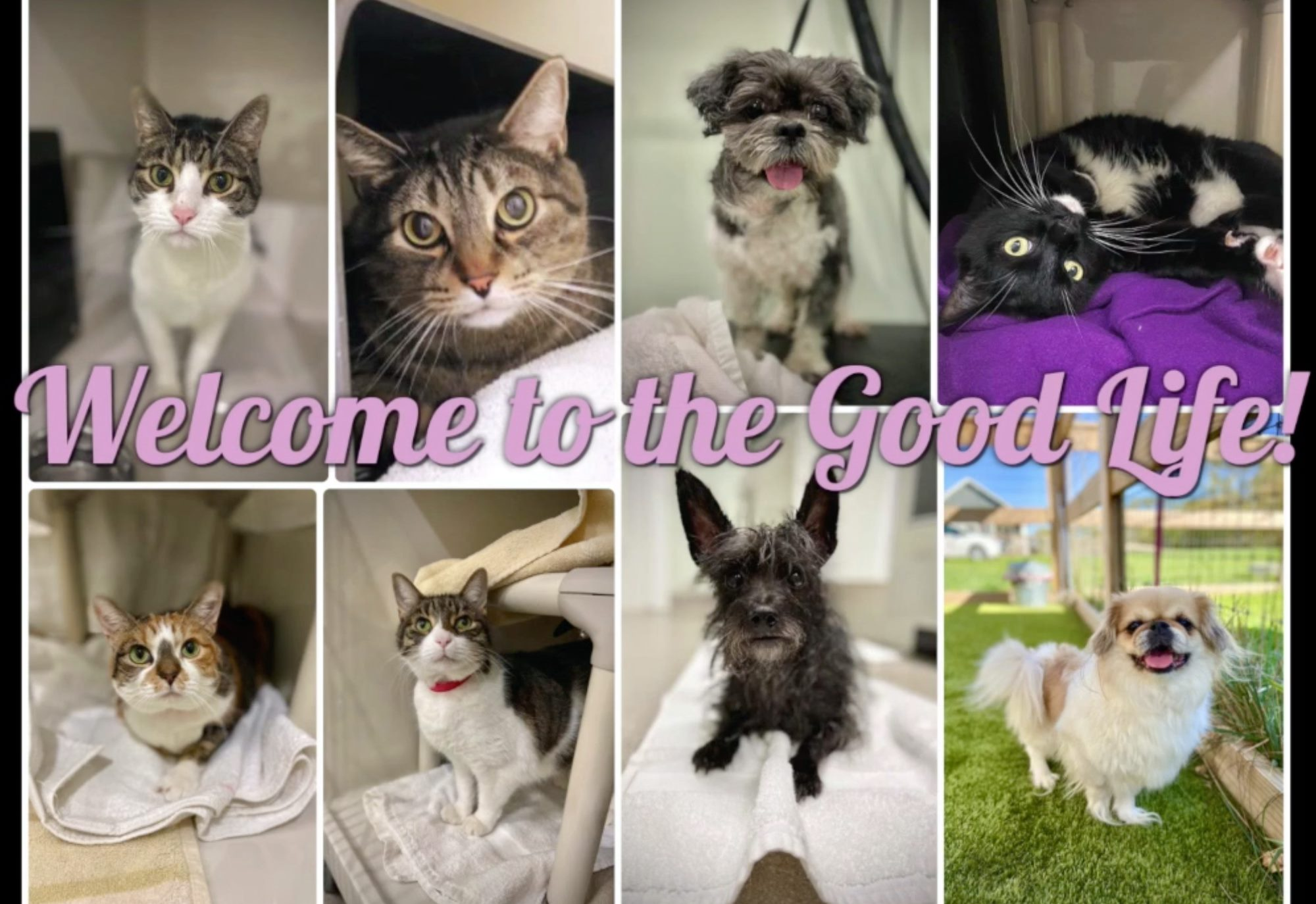 New Adoptable Dogs and cats