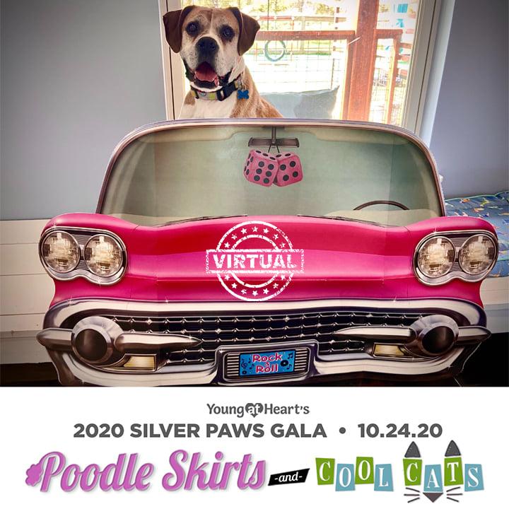 Silver Paws 2020