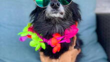 Tiki Tails at Silver Paws 2021